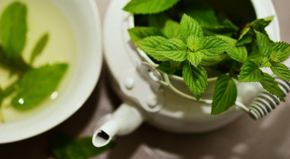 Boire du thé vert pour maigrir